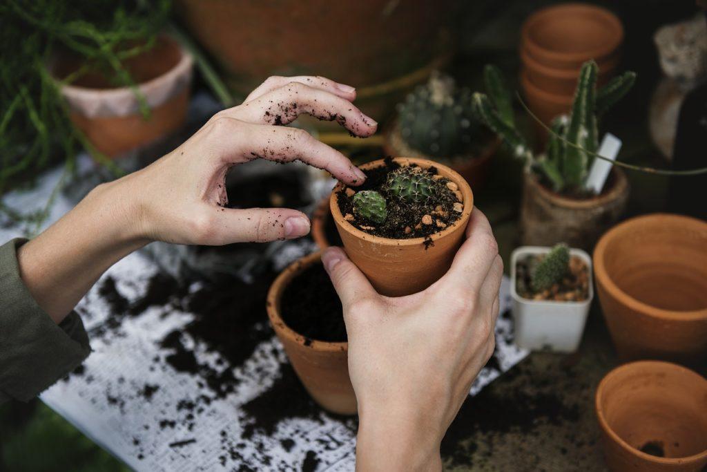 koffiedik in tuin